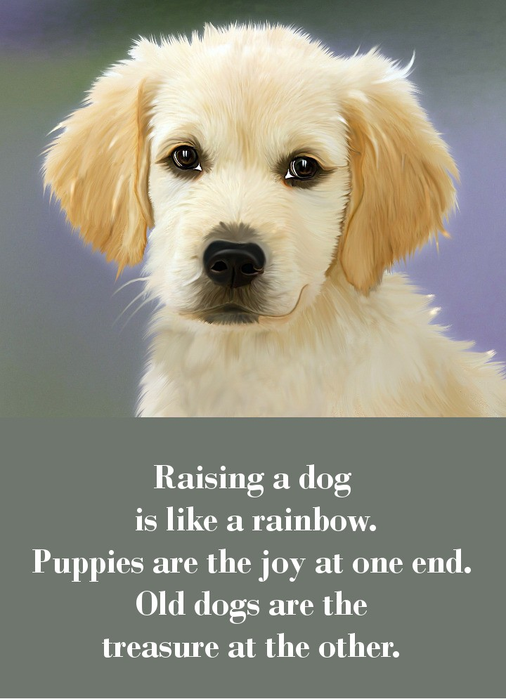 Raising a dog is like a rainbow. Puppies are the joy at one end. Old dogs are the treasure at the other.