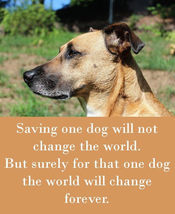 Saving one dog will not change the world. But surely for that one dog the world will change forever.