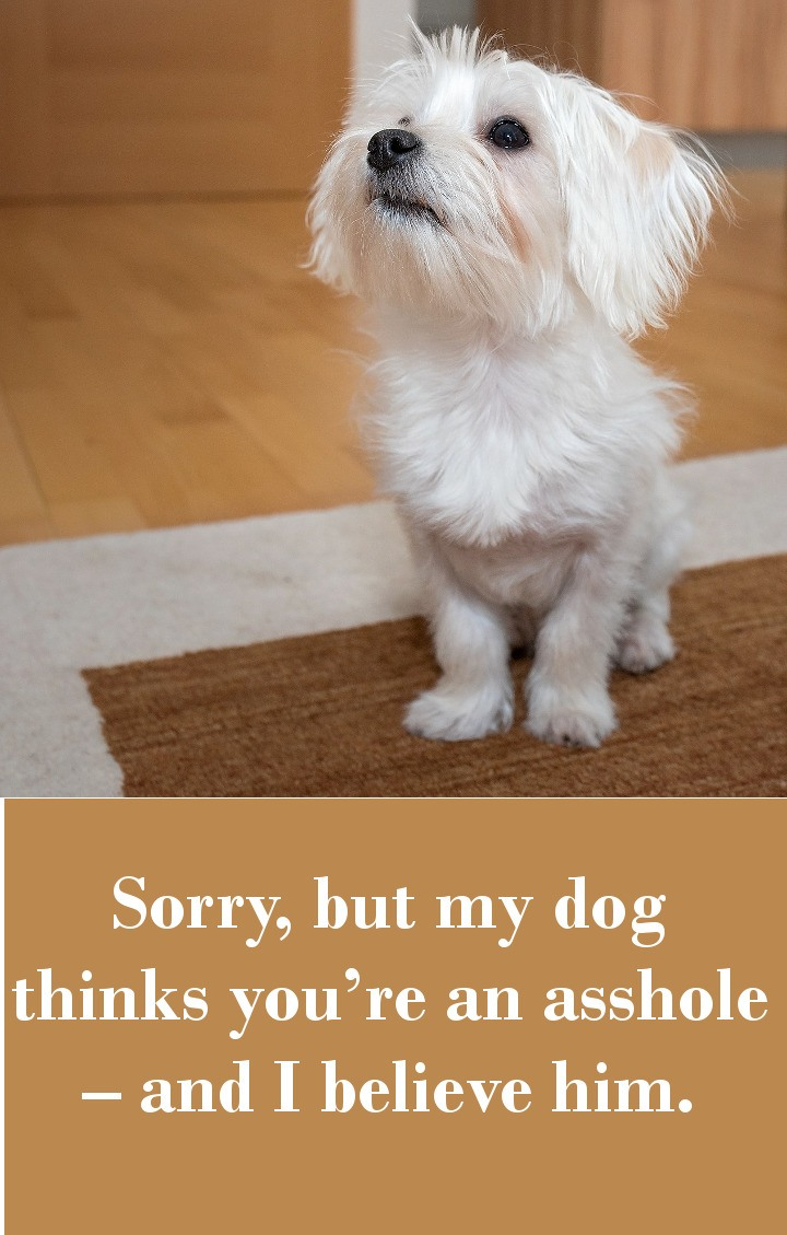 Sorry, but my dog thinks you're an asshole – and I believe him.