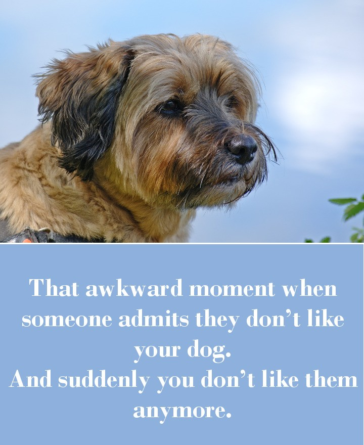 That awkward moment when someone admits they don't like your dog. And suddenly you don't like them anymore.