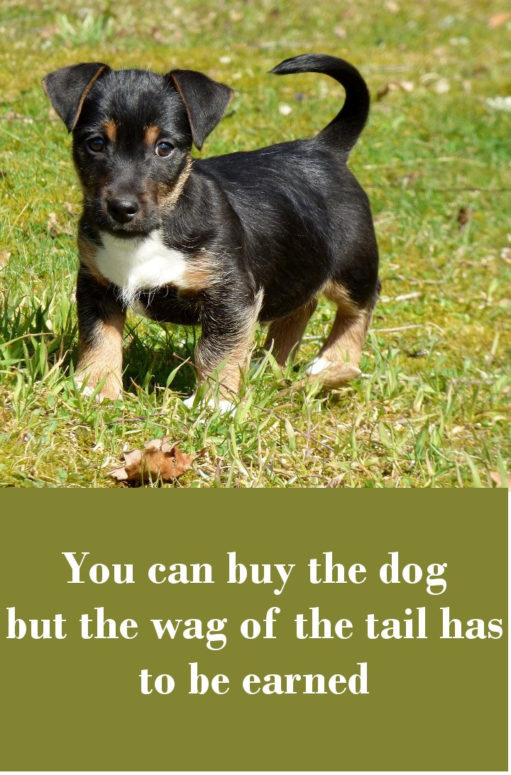 You can buy the dog but the wag of the tail has to be earned