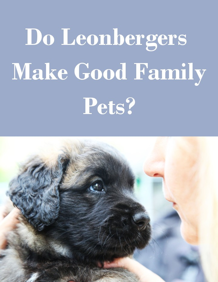 Do Leonbergers Make Good Family Pets