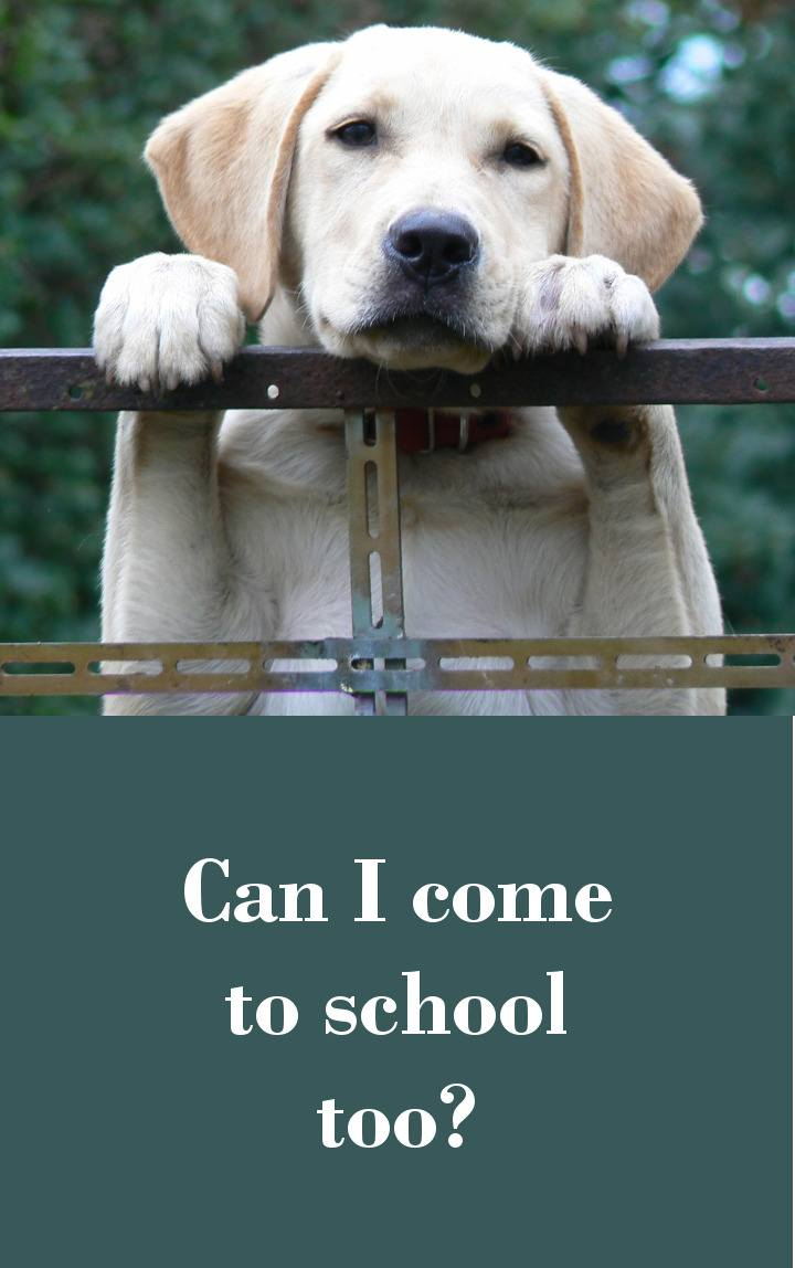 Classroom Dogs - Are They Worth The Hassle?