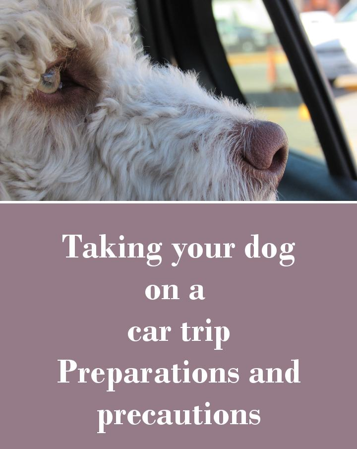 Taking Your Dog On A Car Trip