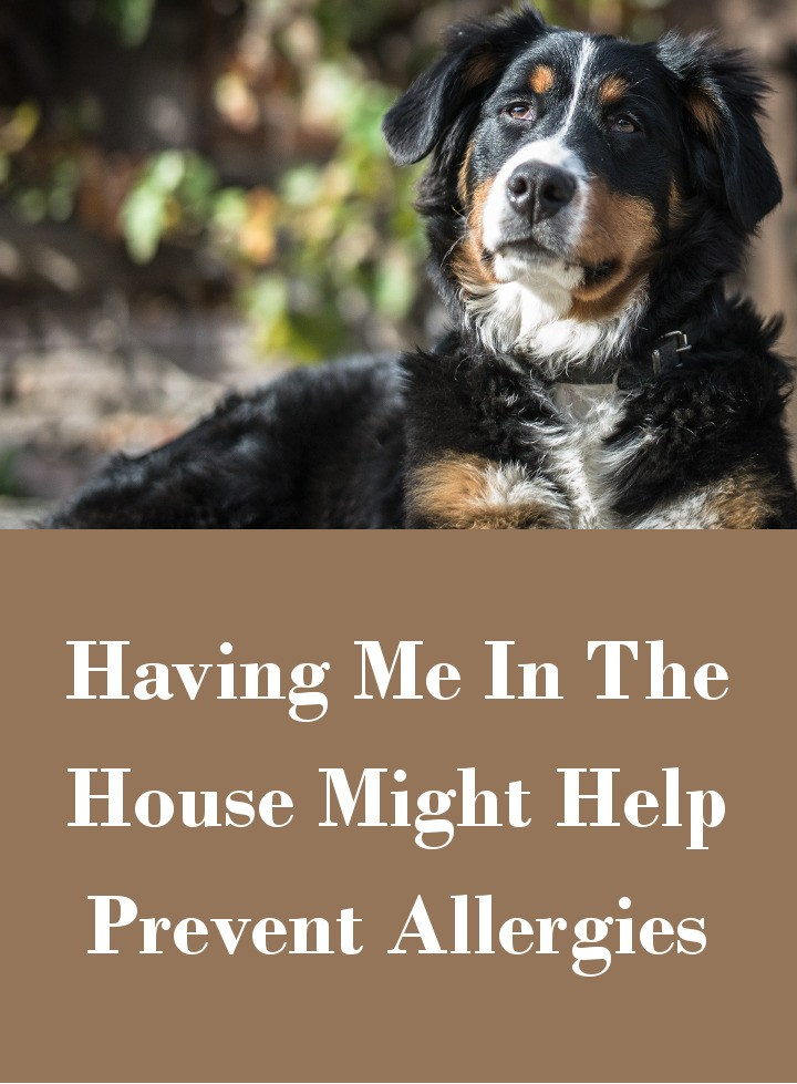 Dogs And Allergies