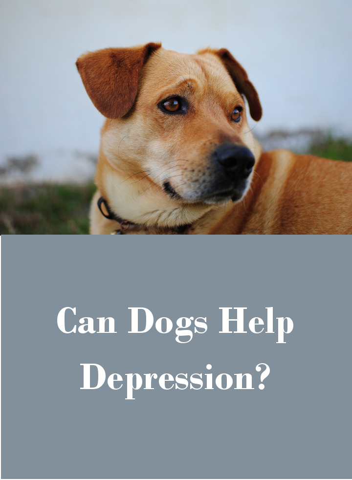 Dogs And Depression