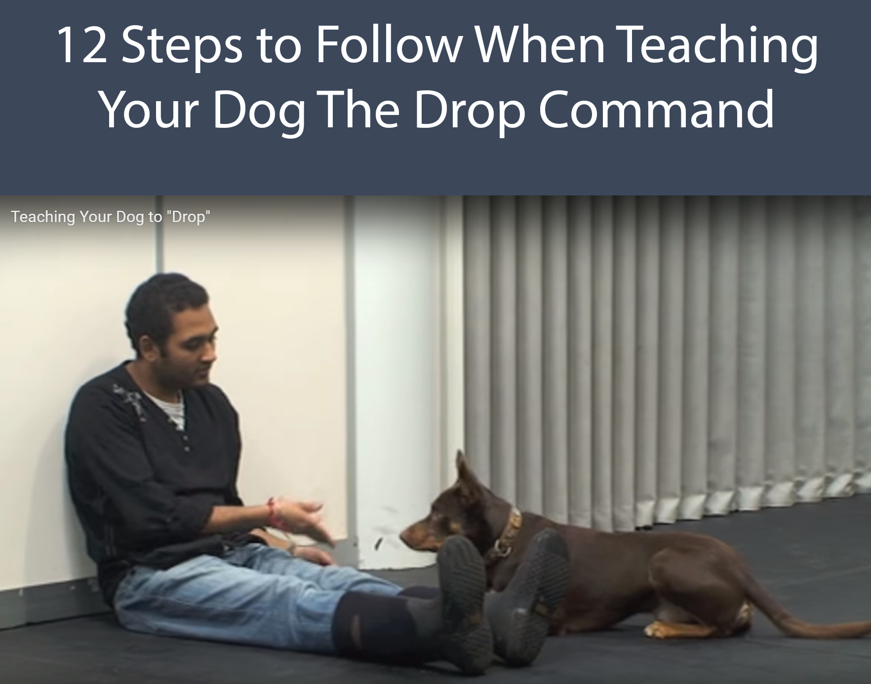 12 Steps to Follow When Teaching Your Dog  The Drop Command