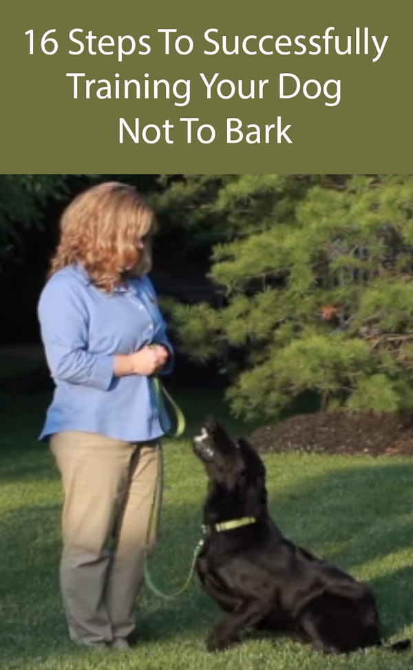 16 Steps To Successfully Training Your Dog Not To Bark