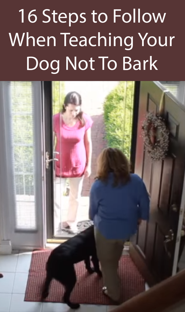 16 Steps to Follow When Teaching Your Dog Not To Bark