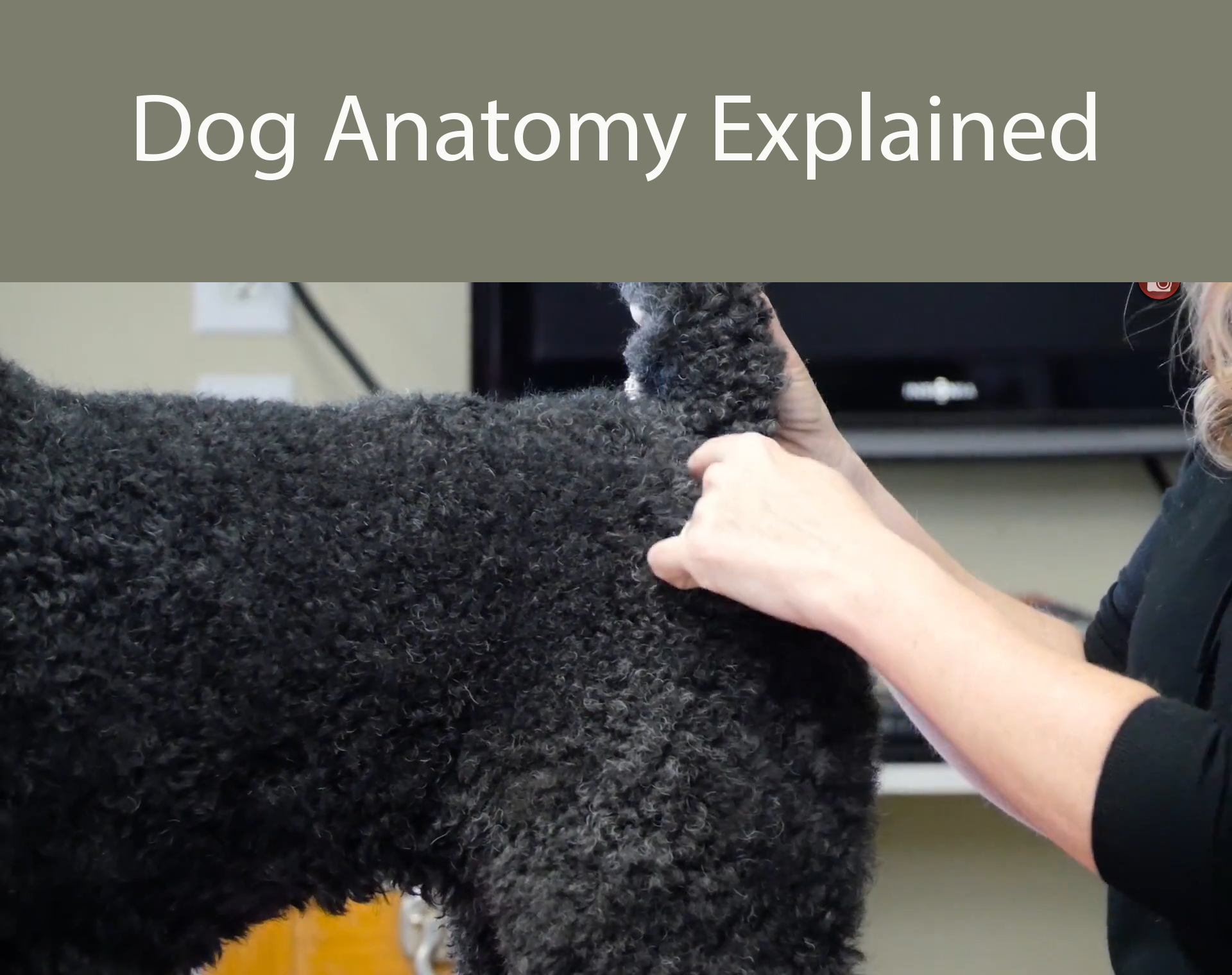 What You Need To Know About Dog Anatomy