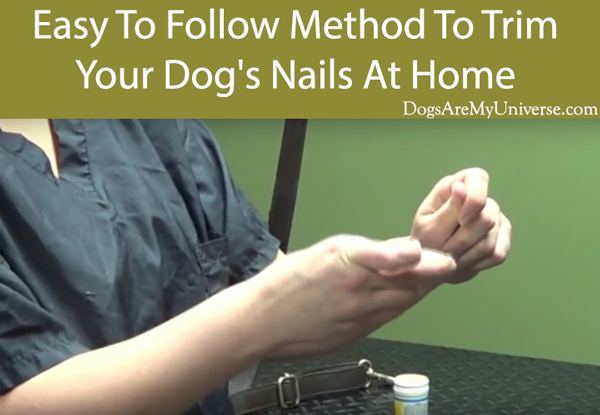 Easy To Follow Method To Trim Your Dog's Nails At Home