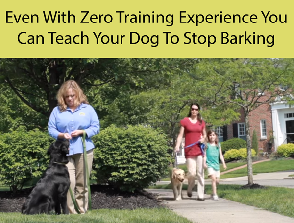 Even With Zero Training Experience You Can Teach Your Dog To Stop Barking