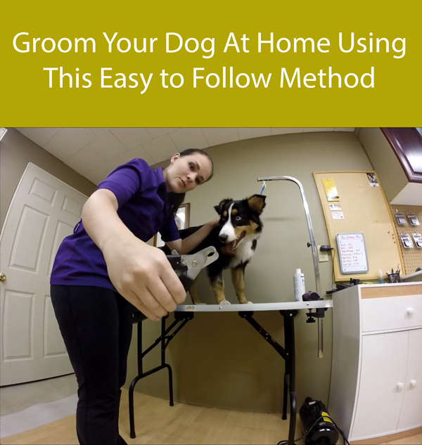 Groom Your Dog At Home Using This Easy to Follow Method