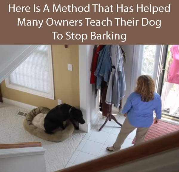 Here Is A Method That Has Helped Many Owners Teach Their Dog To Stop Barking