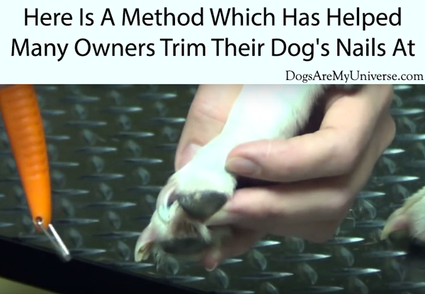 Here Is A Method Which Has Helped Many Owners Trim Their Dog's Nails At Home