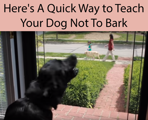 Here's A Quick Way to Teach Your Dog Not To Bark