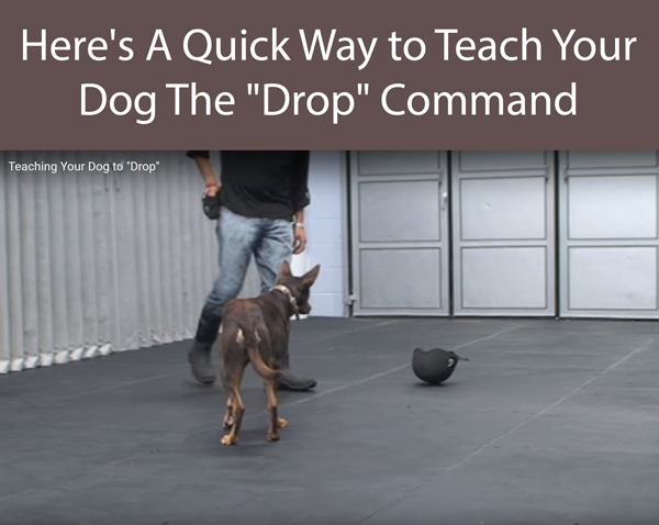 Here's A Quick Way to Teach Your Dog The Drop Command