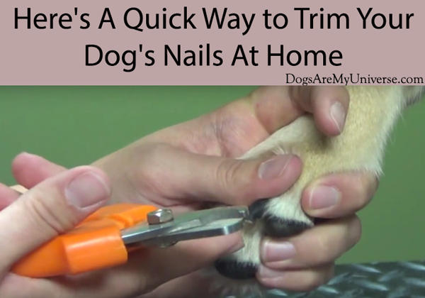 Here's A Quick Way to Trim Your Dog's Nails At Home