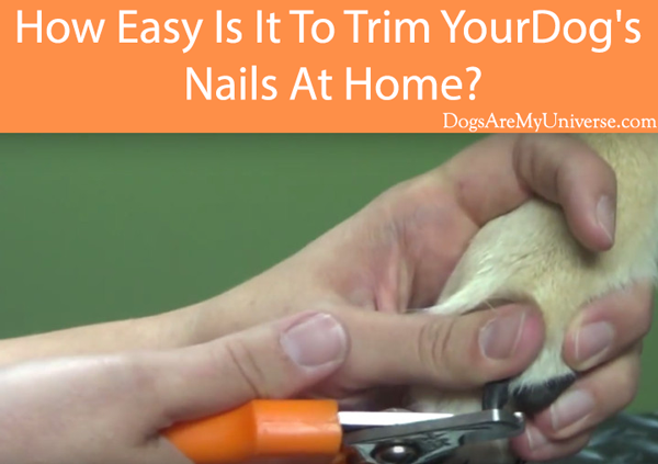 How Easy Is It To Trim Your Dog's Nails At Home
