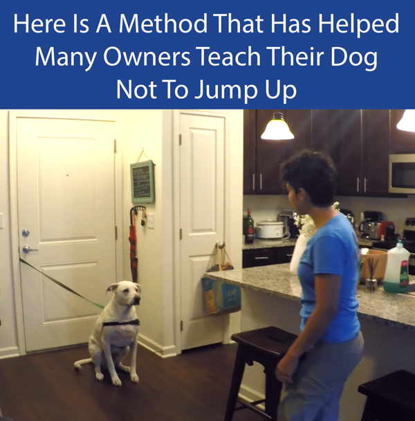 Have Your Dog Controlled With A Tether