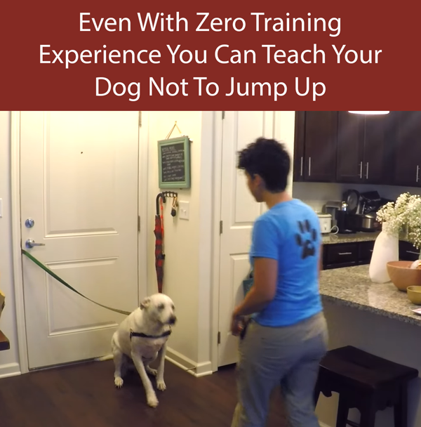 Teach Your Dog Not To Jump Up Step 3