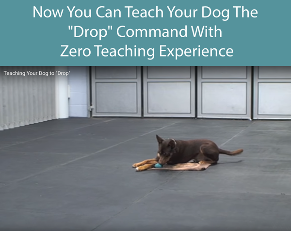 Now You Can Teach Your Dog The Drop Command With Zero Teaching Experience