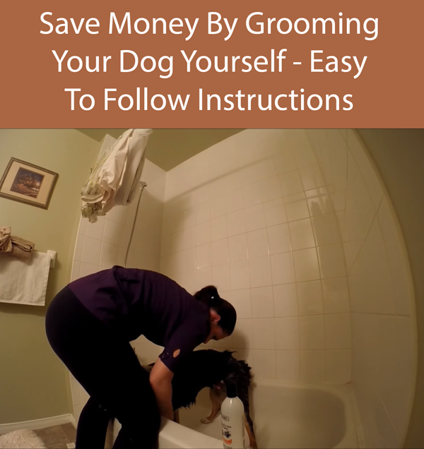 Save Money By Grooming Your Dog Yourself - Easy To Follow Instructions