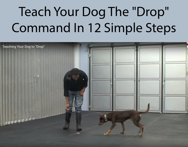 Teach Your Dog The Drop Command In 12 Simple Steps