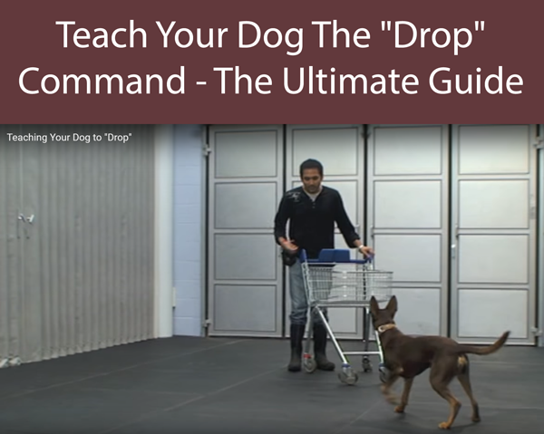 Teach Your Dog The Drop Command - The Ultimate Guide