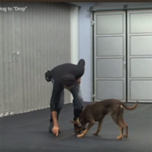Teach Your Dog To Drop