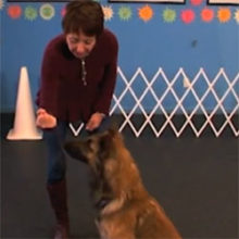 Teach Your Dog To Wait