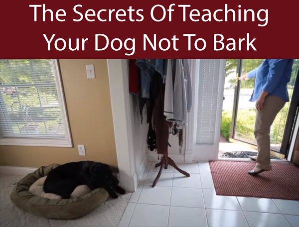 The Secrets Of Teaching Your Dog Not To Bark
