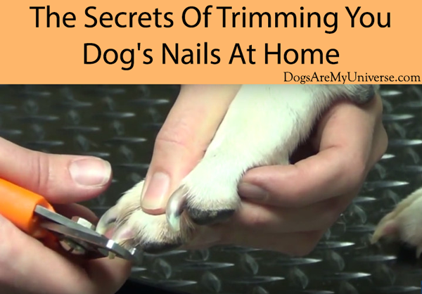 The Secrets Of Trimming Your Dog's Nails At Home