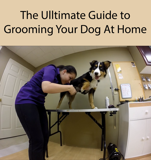 The Ulltimate Guide to Grooming Your Dog At Home