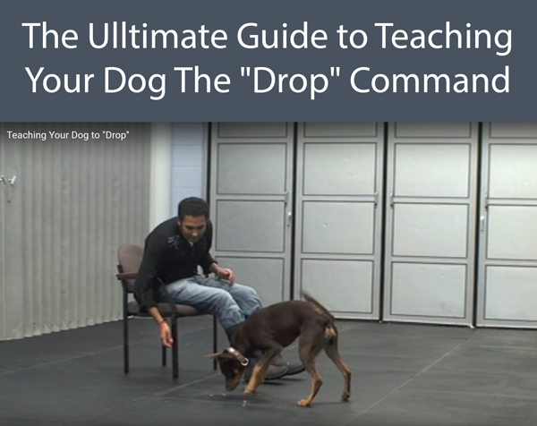 The Ulltimate Guide to Teaching Your Dog The Drop Command