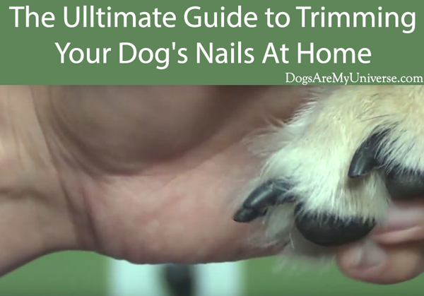 The Ulltimate Guide to Trimming Your Dog's Nails At Home