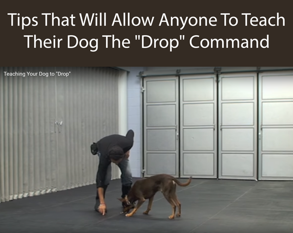 Tips That Will Allow Anyone To Teach Their Dog The Drop Command