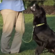 Teach Your Dog To Stop Barking