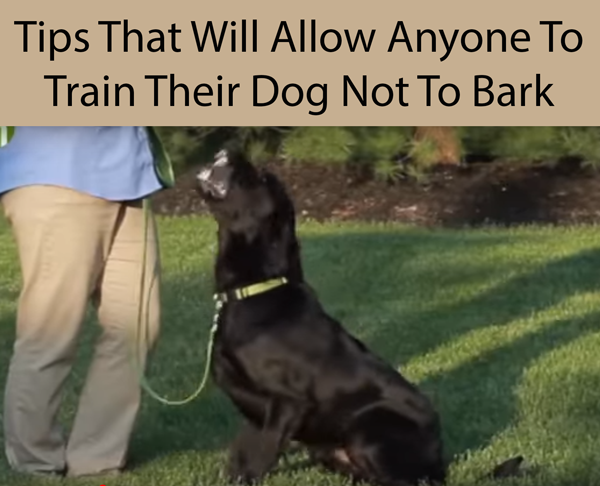 Tips That Will Allow Anyone To Train Their Dog Not To Bark