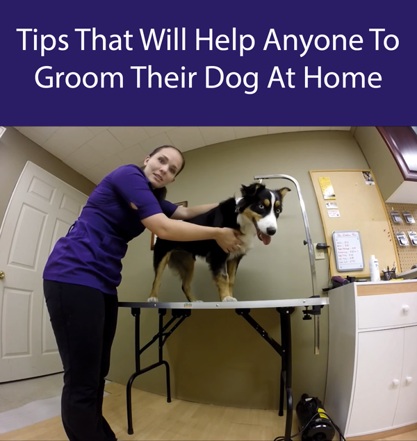 Tips That Will Help Anyone To Groom Their Dog At Home