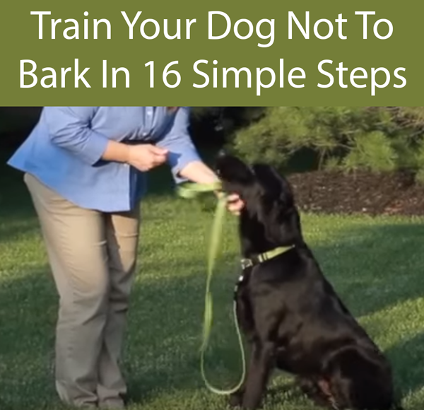 Train Your Dog Not To Bark In 16 Simple Steps