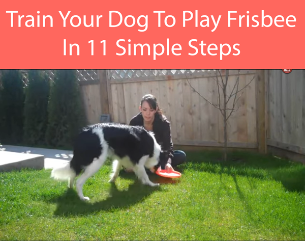 How Do You Train A Dog To Catch A Frisbee