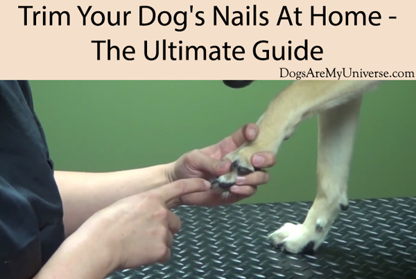 Trim Your Dog's Nails At Home - The Ultimate Guide