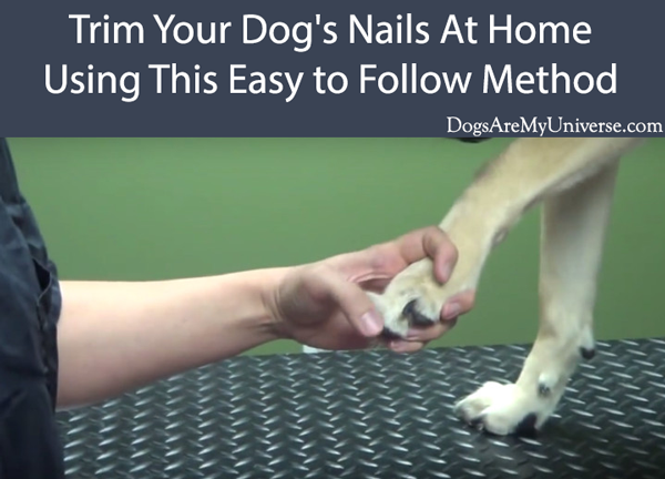 Trim Your Dog's Nails At Home Using This Easy to Follow Method