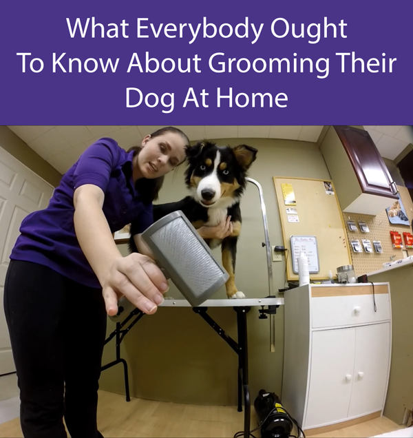 What Everybody Ought To Know About Grooming Their Dog At Home
