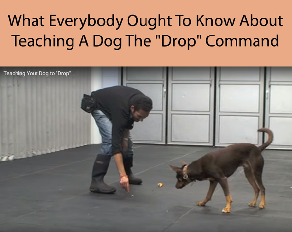What Everybody Ought To Know About Teaching A Dog The Drop Command
