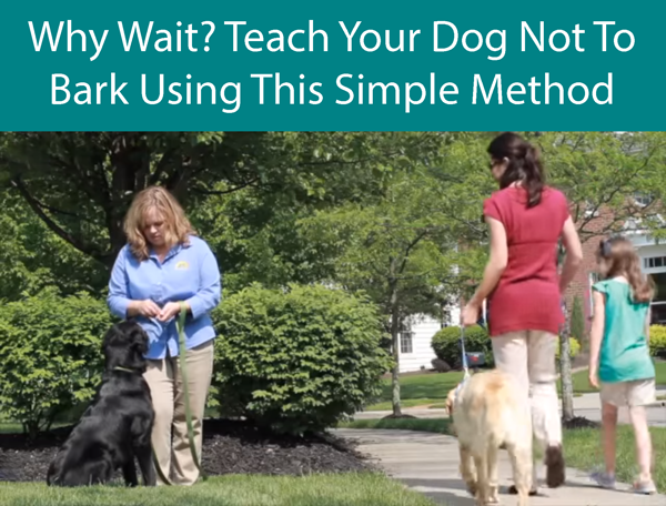 Why Wait Teach Your Dog Not To Bark Using This Simple Method