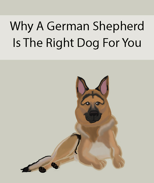 Why A German Shepherd Is The Right Dog For You