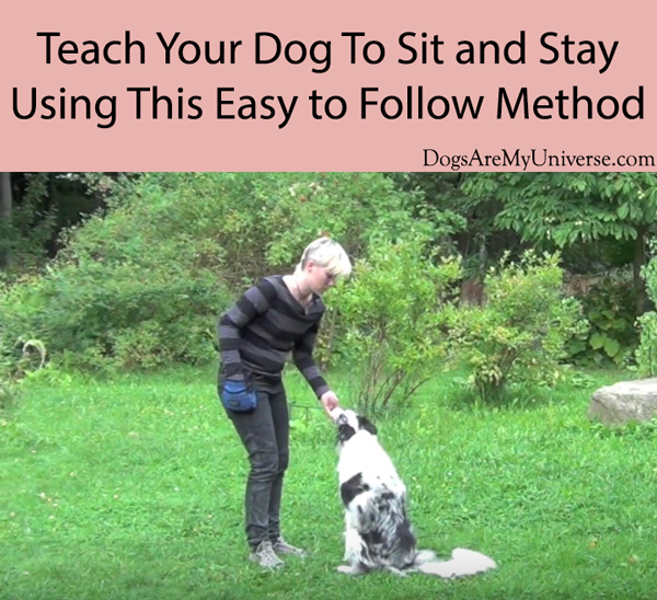 Teach Your Dog To Sit and Stay Using This Easy to Follow Method