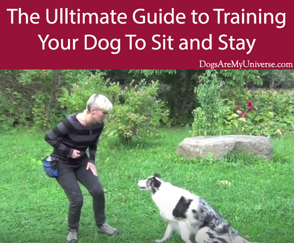 The Ultimate Guide to Training Your Dog To Sit and Stay